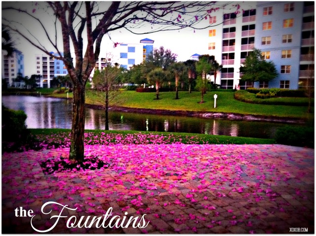thefountains